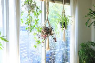 吊るし植物のハンギングプランターのグリーンがある室内の写真素材 [FYI04802019]