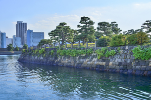 水上バスから見た浜離宮恩賜庭園に並ぶ松と石垣とビル群の写真素材 [FYI04802177]
