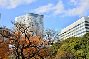 浜離宮恩賜庭園の園内の紅葉と高層ビル群の写真素材 [FYI04802178]