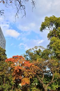 浜離宮恩賜庭園の園内の紅葉と高層ビルの写真素材 [FYI04802179]