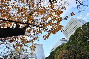 浜離宮恩賜庭園の園内の紅葉と高層ビル群の写真素材 [FYI04802181]