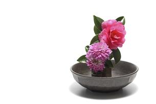 和風に活けた山茶花と菊の花の写真素材 [FYI04802203]
