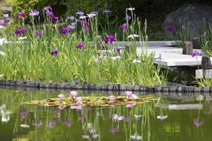 ハナショウブと池の写真素材 [FYI04802210]