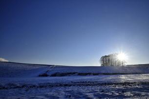 カラマツの丘の夜明けの写真素材 [FYI04802213]