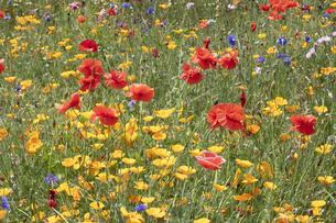 花畑の写真素材 [FYI04802226]