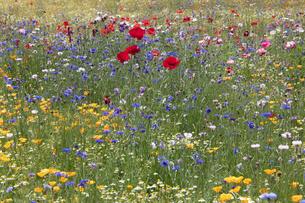 花畑の写真素材 [FYI04802229]
