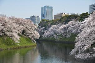 桜満開の千鳥ヶ淵の写真素材 [FYI04802298]