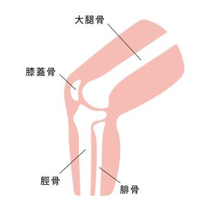 足・膝 関節部 骨 図解 イラストのイラスト素材 [FYI04802387]