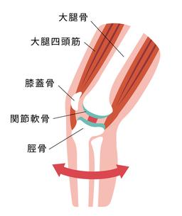 膝の関節痛(変形性膝関節症) 発生の仕組みと原因 イラスト / 健康な膝のイラスト素材 [FYI04802389]
