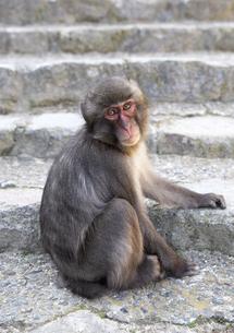 大分市 高崎山自然動物園の写真素材 [FYI04802432]