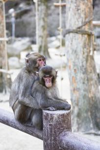 大分市 高崎山自然動物園の写真素材 [FYI04802435]