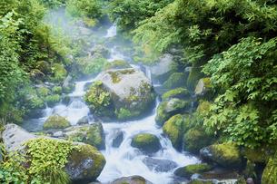 夏の森 みずみずしい早朝の森の渓流の写真素材 [FYI04802443]