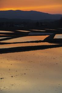 夕日を反射する水を張った水田の写真素材 [FYI04802490]