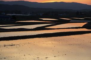 夕日を反射する水を張った水田の写真素材 [FYI04802499]