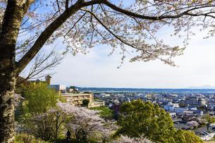 菊池市街地風景 うららかな春の季節 桜 日本の写真素材 [FYI04802553]