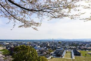 菊池市街地風景 うららかな春の季節 桜 日本の写真素材 [FYI04802554]