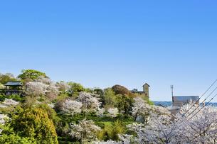 春空 桜 うららかな春の季節 日本の写真素材 [FYI04802568]