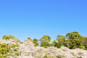 春空 桜 うららかな春の季節 日本の写真素材 [FYI04802583]