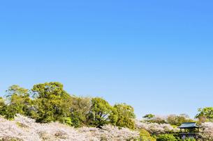 春空 桜 うららかな春の季節 日本の写真素材 [FYI04802587]