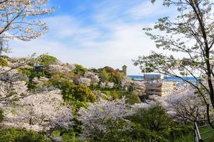 うららかな春の季節 桜風景 日本の写真素材 [FYI04802597]