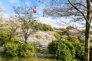 春空 桜 うららかな春の季節 日本の写真素材 [FYI04802602]