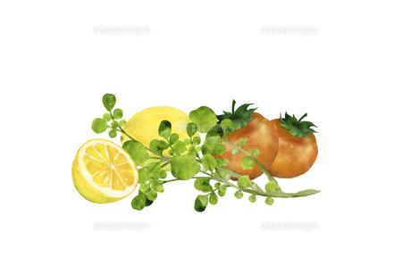 クレソンとレモンとトマトのイラスト素材 [FYI04802892]
