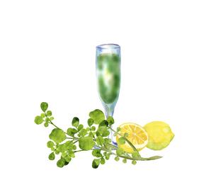 クレソンとレモンとジュースのイラスト素材 [FYI04802893]