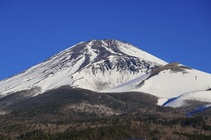 水ヶ塚公園駐車場から迫るような冬の富士山の写真素材 [FYI04803004]