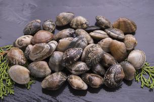活けあさり貝の写真素材 [FYI04803100]