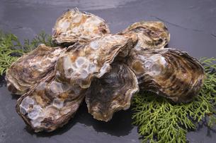 殻付き牡蛎の写真素材 [FYI04803106]