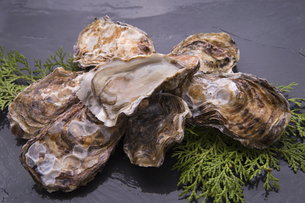 殻付き牡蛎の写真素材 [FYI04803107]