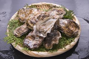 殻付き牡蛎の写真素材 [FYI04803108]