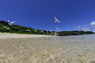 宮古島の海の写真素材 [FYI04803271]