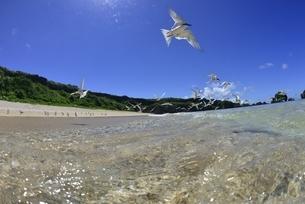 宮古島の海の写真素材 [FYI04803278]