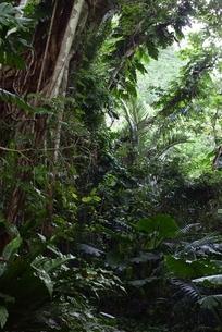 宮古の森の写真素材 [FYI04803288]