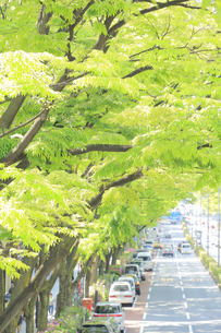新緑の表参道の写真素材 [FYI04803366]