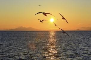 朝日と海鳥の写真素材 [FYI04803391]