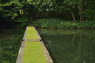 小石川後楽園・西湖の堤の写真素材 [FYI04803461]