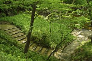 小石川後楽園・散策路の写真素材 [FYI04803463]