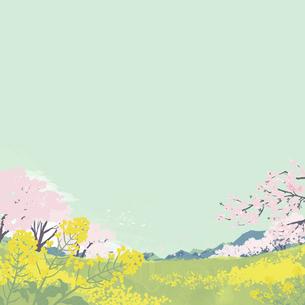 春の桜と菜の花畑のイラスト素材 [FYI04803479]