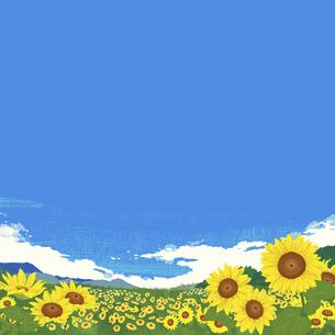 夏のひまわり畑のイラスト素材 [FYI04803480]