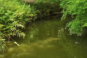 小石川後楽園・神田上水跡の写真素材 [FYI04803496]