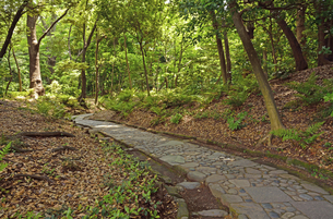 小石川後楽園・延段の写真素材 [FYI04803518]