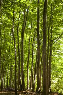 美人林の写真素材 [FYI04803587]