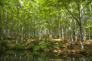 美人林の写真素材 [FYI04803588]