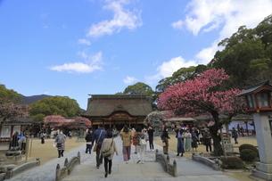 太宰府天満宮境内の梅を楽しむ参拝客たちの写真素材 [FYI04803764]