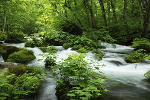 初夏の奥入瀬渓流の写真素材 [FYI04803766]