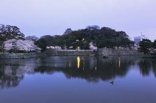東雲の和歌山城。の写真素材 [FYI04804039]