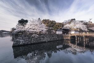 和歌山城・大手門。の写真素材 [FYI04804042]