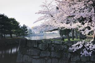 春の和歌山城公園。の写真素材 [FYI04804043]